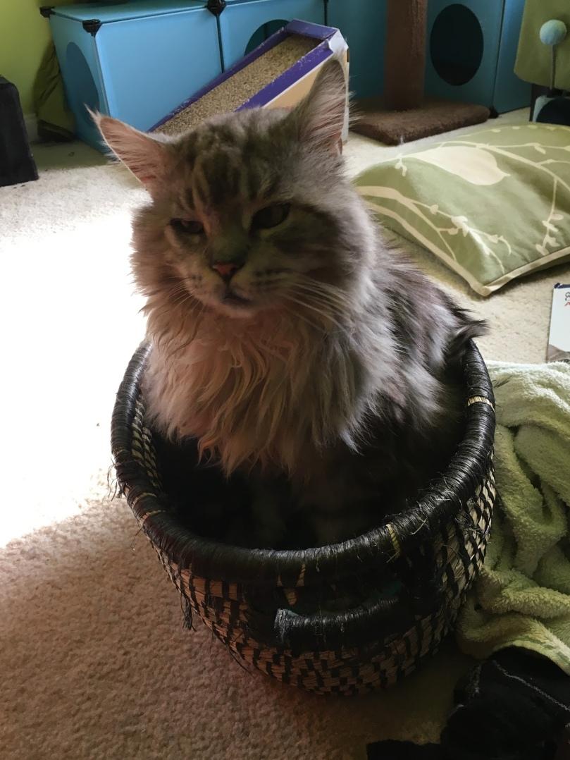Frosty Basket.jpg